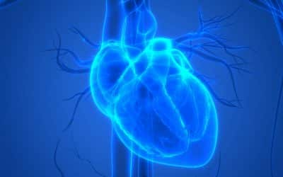 Sales Lesson: What Organ Does The Heart Pump Blood To First?